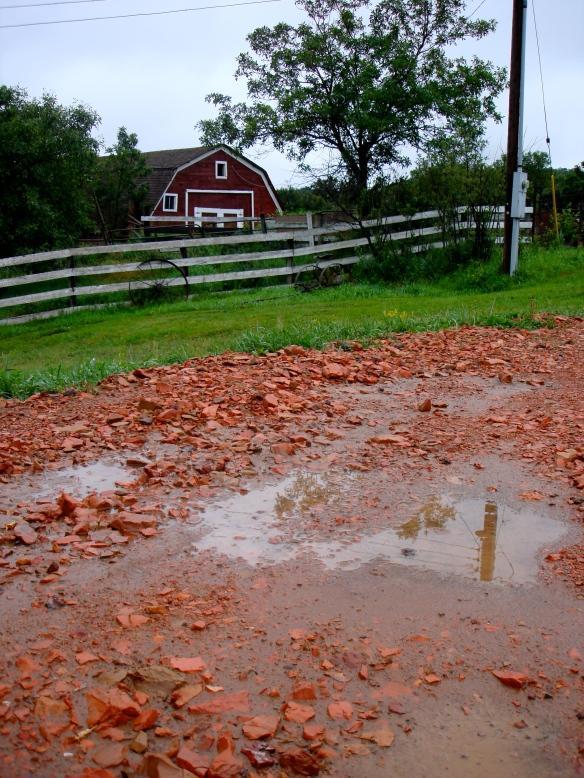 Barnyard Rain