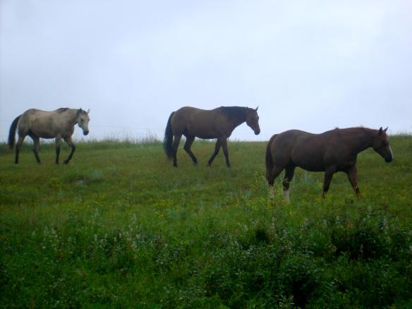 Rain on horses