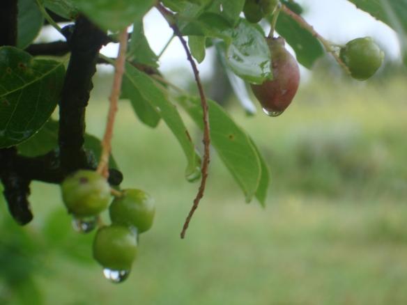 Rain on berries