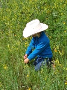 Cowgirl Wildflower