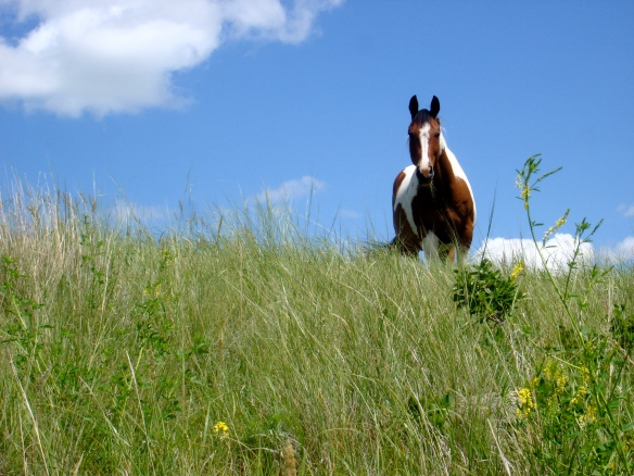 Horse on hill