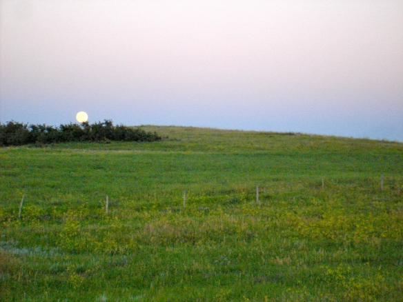 Moon rise over pasture