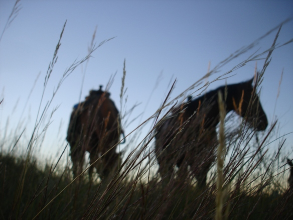 September 28, 2010. Horses in evening grass