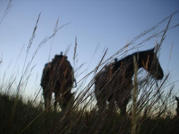 September 28, 2010. Horses in evening grass
