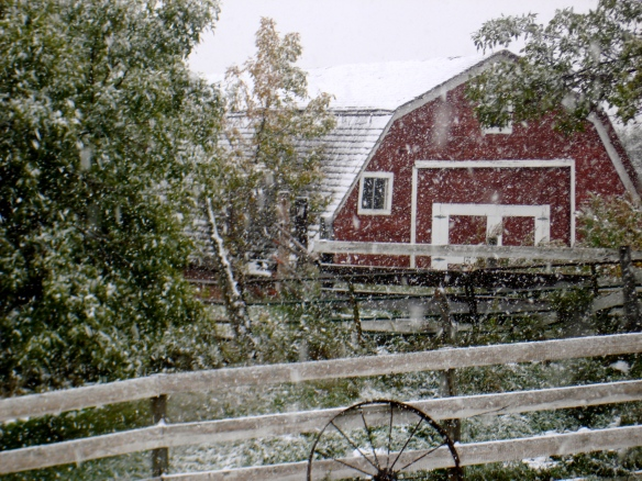 Barnyard Fall snow