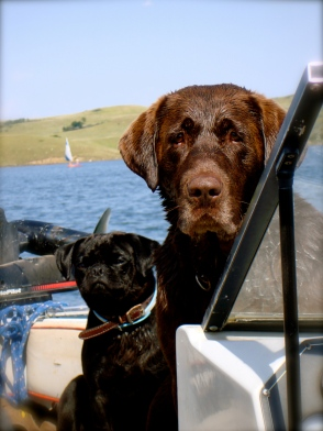 Dogs on the boat