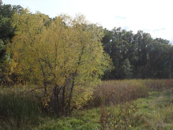 September 25, 2010. Yellow Tree