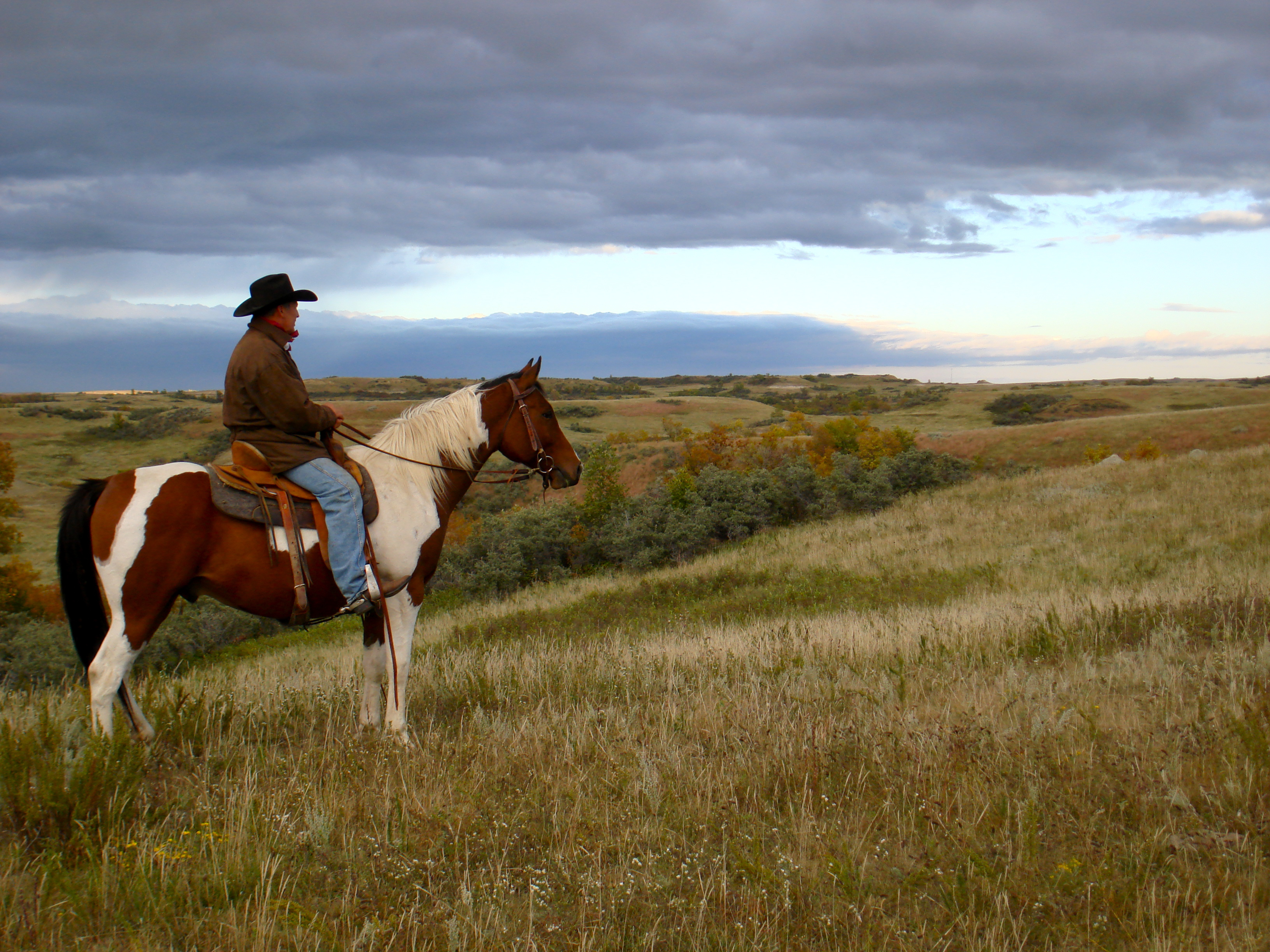 Horse on horizon