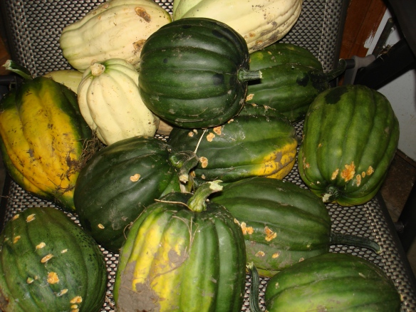 September 23, 2010. Salvaged Squash