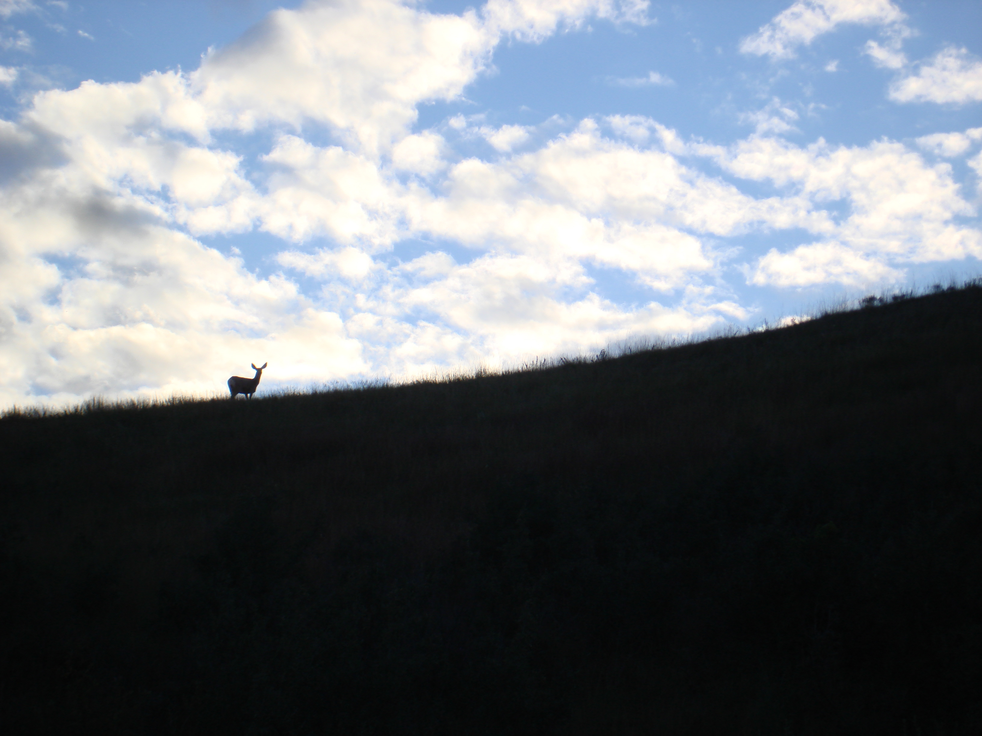 Deer on horizon