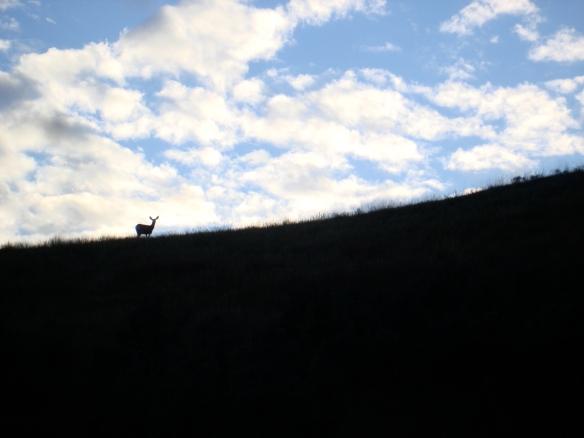 Deer on horizon