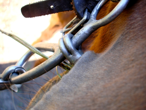 October 4, 2010. Horse bit and hay