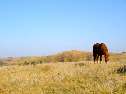 October 10, 2010. Horse in Autumn