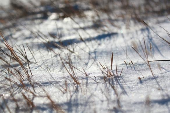 November 1, 2010. Snow Melt