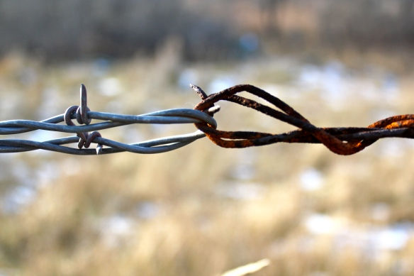 November 12, 2010. Barbed Wire