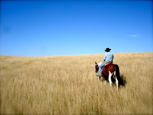 October 3, 2010 Horse in golden grass