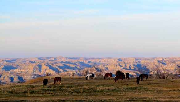 Horses in Badlands