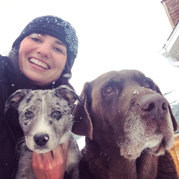 Jessie and Dogs