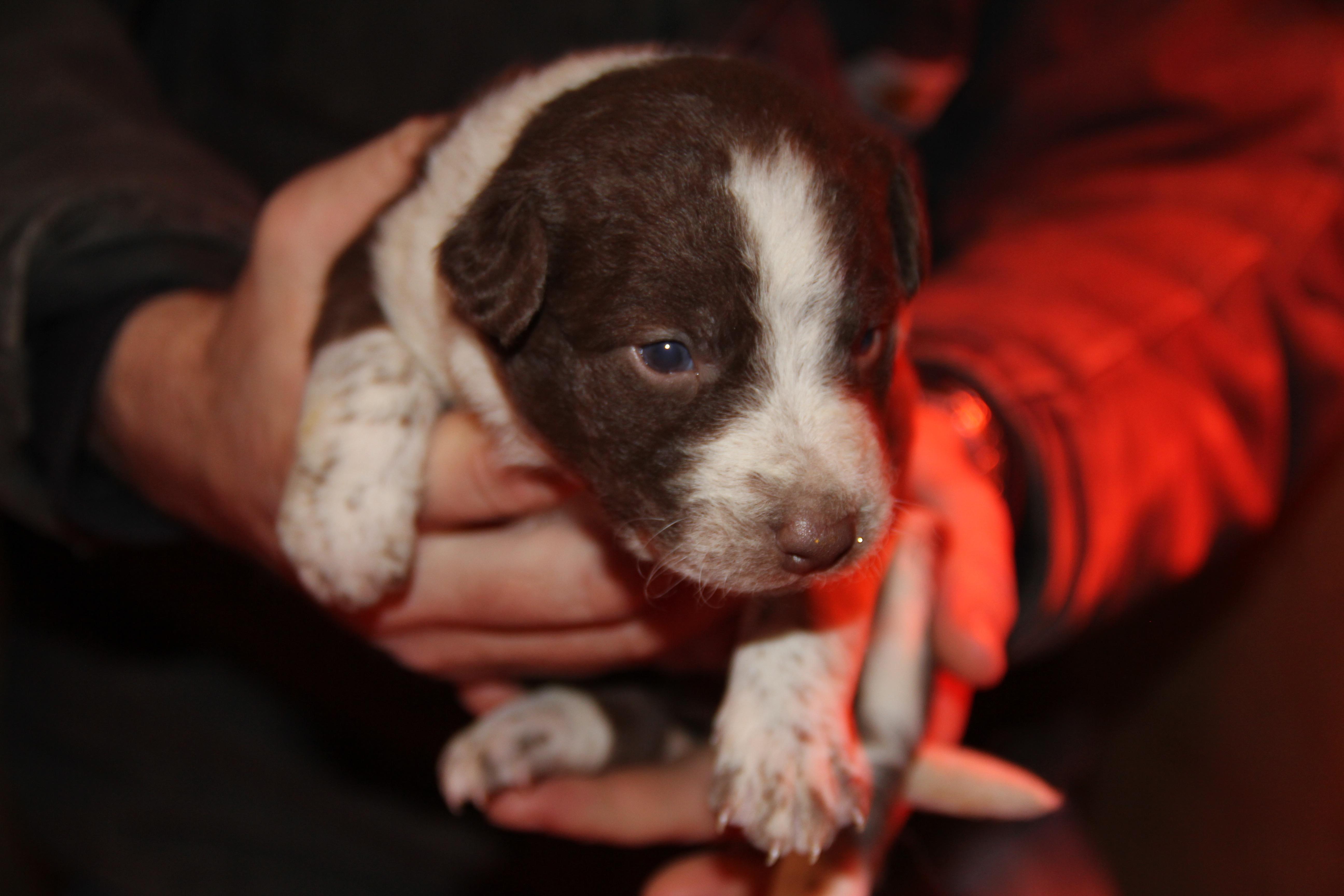 Edie's Pup 1