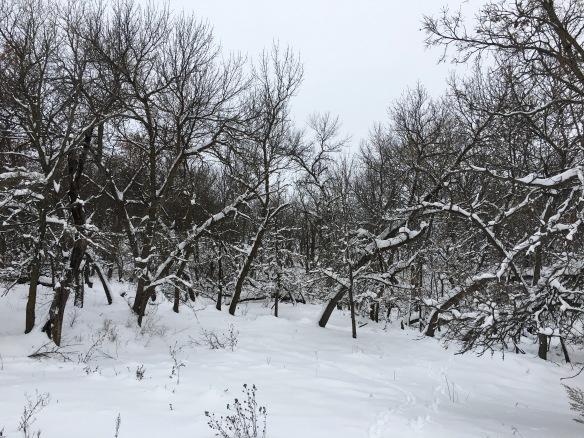 snow-3-1