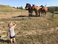edie horses