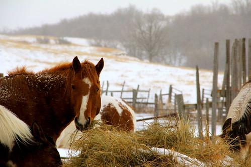 Animals of winter